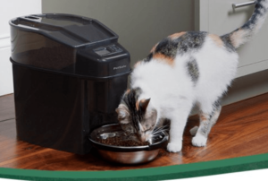 Best automatic cat feeders